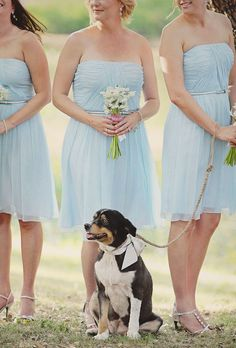 PUPPY! oh the simple, little things. i want our pup to be a part of my wedding as well :) adorable.