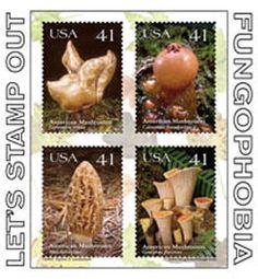 beautiful Mushrooms | Beautiful N Y  Fungi - Mushroom Hunting and