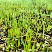 How to Grow Grass in Hard Dirt | eHow