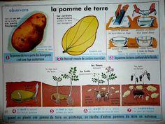 La pomme de terre (affiche)