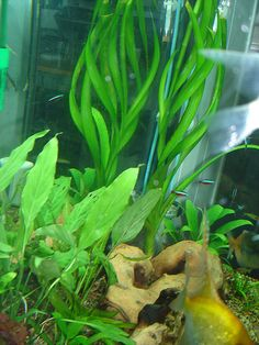 L'Alga Clorella elimina i metalli pesanti - Ambiente Bio