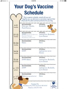 chihuahua puppy care Tips Puppy Shot Schedule, New Puppy Checklist, Puppy Training Schedule, Training Your Dog, Puppy Feeding Schedule, Training Pads, Training Classes, Baby Puppies, Dogs And Puppies
