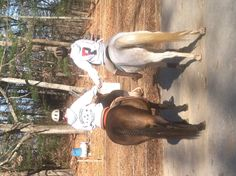 Bestfriend & our wonderful horses. <3