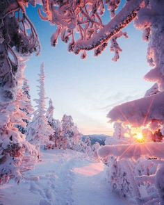 Northern landscape ~ Lapland Would you like to be in pic 3 or Photo: . - Best Places to Visit X Winter Photography, Landscape Photography, Nature Photography, Travel Photography, Winter Wallpaper, Nature Wallpaper, Winter Pictures, Nature Pictures, Winter Magic