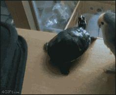 Vögel können aber auch richtig scheiße sein | 21 Fotos, die zeigen, dass Tiere Arschlöcher sind