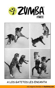 A los gatitos les en