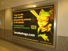 A frog poster we made for Atlanta Int'l airport. www.savethefrogs.com/airports
