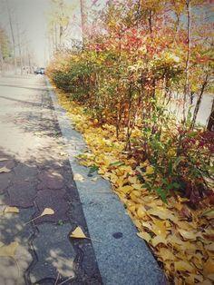 은행잎이 바닥에 가득하다.