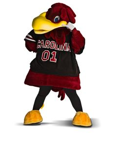 Capital One Mascot Challenge 2014 #cocky #SouthCarolina #SEC