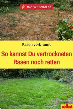 Garden 69981 Your lawn has just dried up due to the high heat? How to save your dry lawn! # lawn # dried lawn # lawn rescue # lawn care # garden care # garden # self Garden Types, Garden Care, Outdoor Plants, Outdoor Gardens, Rotation Des Cultures, Small Garden Design, Plantation, Lawn Care, Small Gardens