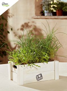 Easyorto chive & rocket kits now available! Start growing perfect herbs in the comfort of your own kitchen!