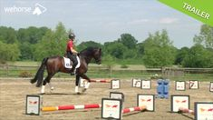 Whether a more expressive canter or a better pirouette, the cavaletti exercises in canter produces amazing results. In this video Ingrid Klimke demonstrates the various possible exercises. Horses Jumping Videos, Horse Videos, Horse Exercises, Horse Riding Tips, Dressage Horses, Draft Horses, Horse Training, Show Jumping, Horse Care