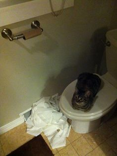 My work here is done...