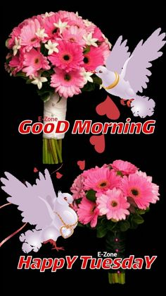 Tuesday Quotes Good Morning, Good Evening Greetings, Happy Tuesday, Beautiful Flowers, Sunday, Poster, Domingo, Billboard