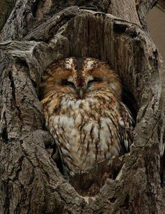 ^ such a cute owl!
