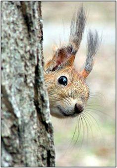 Hello squirrel! #furry friend #SainsburysAutumnStyle