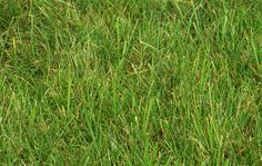 High Resolution Grass & Leaf Textures