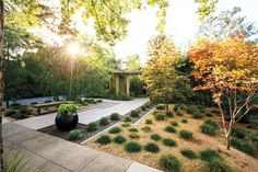 Lose the lawn: before and after in Palo Alto   A blog by Sunset