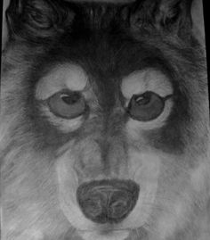 graphite wolf portrait with golden eyes by 1bluwall on Etsy