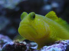 Nano Aquarium, Reef Aquarium, One Fish, Corals, Bay Area, Link