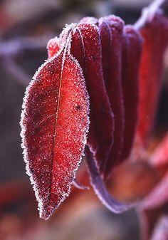 """zomkidd: """" Frost by Jürgen Mayer on Flickr. """""""