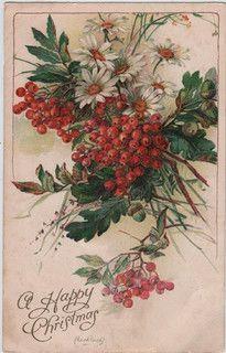 Vintage Christmas card, daisies and berries