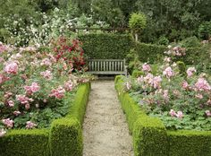 11 Essential Tips for Creating a Rose Garden  - HouseBeautiful.com