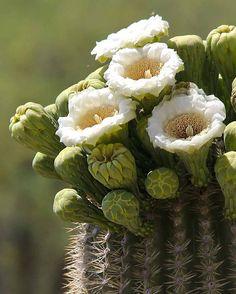 Blooming Cactus Flowers Hoops Artisan Made Cactus