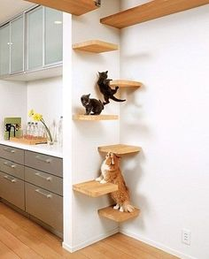 stagger small shelves back and forth across a corner for a cat ladder. much che… stagger small shelves back and forth across a corner for a cat ladder. much cheaper and not as tacky. Install next to stove! Japanese Cat, Japanese Animals, Cat Room, Dog Play Room, Unique Cats, Unusual Pets, Exotic Pets, Cat Decor, Crazy Cats