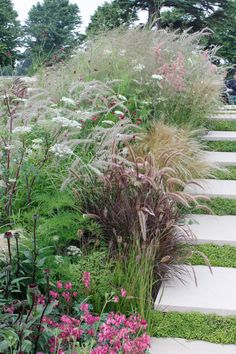 Grasses looking good near water (from RHS Hampton/Achica): annual bronze grass Pennisetum setaceum 'Rubrum', together with its perennial sister, Pennisetum orientale 'Tall Tails', which has arching stems of fluffy pink-tinged white flowers, with red dotty Sanguisorba tenuifolia and the rich pink Dicentra 'King of Hearts'.