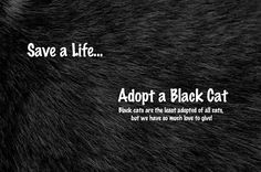 ): I can vouch fully that there is NOTHING about black cats that is ANYMORE worrisome than with other cats! My Charcoal is small, quiet, gentle, a bit mischievous but mostly non-destructive, totally sweet...and SOLID black!
