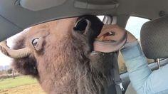 "Buffalo to Bread Lady: ""Hey, Wanna Make Out?"""