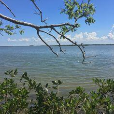 Mosquito Lagoon Florida - http://ift.tt/2hI2IMP