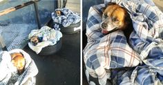 Bus Station Comes Up With A Brilliant Solution To Help Stray Dogs Escape The Cold | Bored Panda