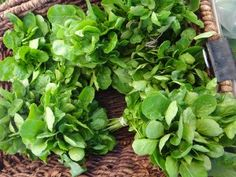 The Healthiest Vegetable in the World and We Have Completely Forgotten It! Watercress!