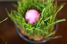 Spring centerpiece idea for cheap! Wheat grass in a mini bucket.