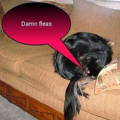 #fb #dogs