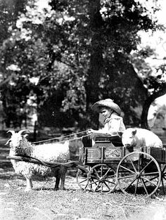 Boy in goat cart with a pig and vegetables.