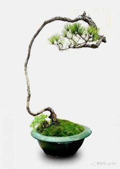 Bonsai in training Indoor Bonsai Tree, Mini Bonsai, Bonsai Art, Bonsai Plants, Bonsai Garden, Ikebana, Plant Bugs, Juniper Bonsai, Outside Plants