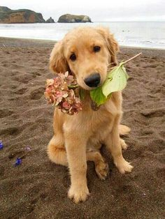 Sweet puppy with flower