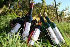 Wijndomein Oude Waalstroom - Biologische wijngaard en theeschenkerij - Bommelerwaardgids