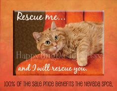 """Rescue Cat  Magnet - 2.5"""" x 3.5"""" -  100% of Sale Price to Benefit the NSPCA"""