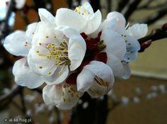 spring    from: http://al-ka.flog.pl/wpis/4601774/dzisiejsze-spotkanie-
