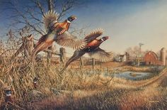 "This Meger Print shows Rooster Pheasants getting up along the fence line of this old farmstead Image Size 14"" x 9.25"""