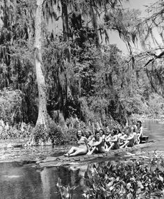 "It won't bite…Hop on the ""Alligator Boat"" at Wakulla Springs (1941). 