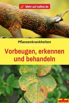 Wer schnell erkennt, dass die eigenen Pflanzen befallen sind, kann vorgehen und … If you quickly realize that your own plants are affected, you can proceed and choose the right treatment method. We tell you what to look for! Balcony Planters, Patio Plants, Outdoor Plants, Garden Planters, Outdoor Gardens, Container Herb Garden, Container Flowers, Container Plants, Flowers Perennials