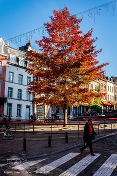 Red is the color of fall in the city by henkvanhellem