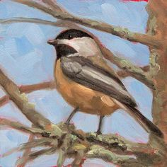 Chickadee #3 - small daily oil painting - buy original small affordable art nature bird original piece of fine art painted by Krista Hasson garden