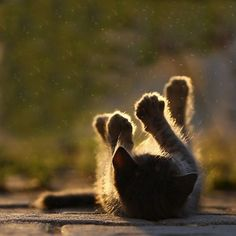 Paws in the air.