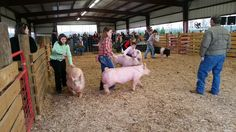Pig Show 2016 at Jasper County High